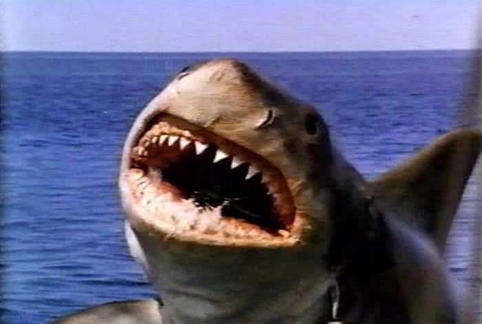 Помимо революции там ещё и акулы-людоеды(их так и не поймали...не отдых...